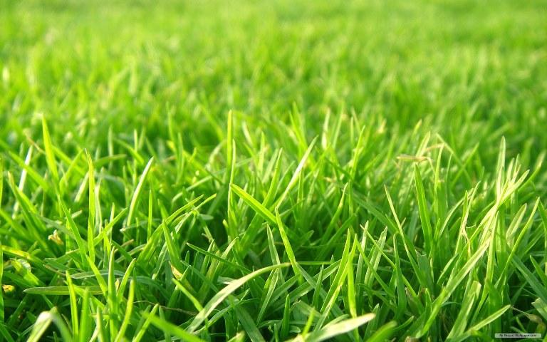 Grass football field